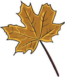 Drawing of a brown maple leaf